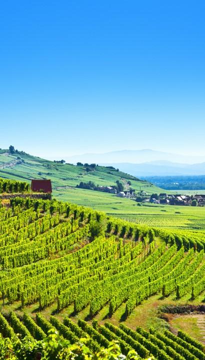 Wijnen in de Elzas: Hotel Les Remparts