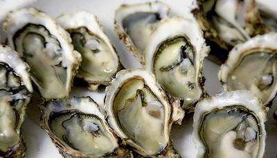 """<div style=""""text-align: justify;"""">Het oesterpark van Marennes-Oléron is het grootste van Europa met oesters die tot de beste ter wereld behoren. Wat maakt ze dan zo speciaal? Dit en nog veel andere 'weetjes' worden u met heel veel liefde voor het vak uit de doeken gedaan door de lokale oesterkwekers op een begeleid bezoek. En daar hoort natuurlijk een degustatie bij..</div>"""
