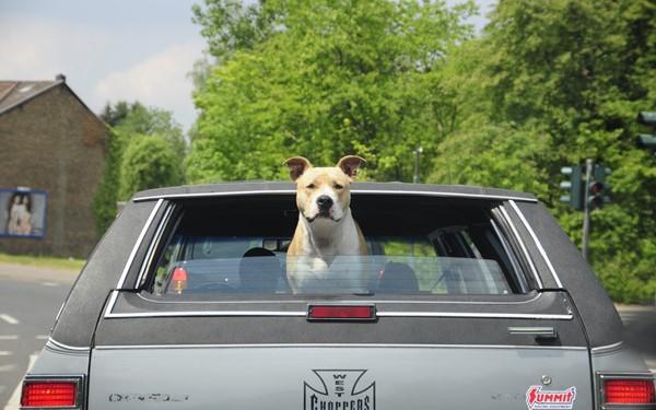 Comfortabel op reis met je huisdier