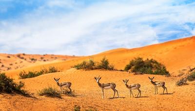 """<div style=""""text-align: justify;"""">Het resort is de ideale uitvalsbasis voor een ontspannen vakantie temidden van een indrukwekkend natuurgebied. Het ligt op slechts 15 minuten rijden van de zee en 1 uur van de luchthaven van Dubai. Hier beleef je vanaf de eertse rij de schoonheid van het Arabische woestijnlandschap.</div>"""
