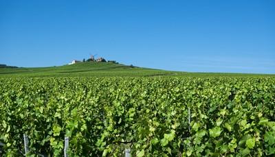 Vertrek om 7u uit Affligem. Via Cambrai naar Urvillers, koffiepauze. Via Reims en de heuvelachtige &ldquo;Route Touristique du Champagne&rdquo; naar Chamery voor rit met het toeristentreintje door de wijngaarden en het dorpje. Bezoek en proeverij in een Champagnekelder. Aperitief en viergangen middagmaal.&nbsp;<br /> &nbsp;