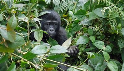 """<span style=""""color:#FF0000;""""><strong>Ongerept groen</strong></span><br /> Ongerept groen vind je op bestemmingen als <strong>Oeganda, Costa Rica</strong> of <strong>Sri Lanka</strong>. Verken een tropisch regenwoud of observeer wilde diersoorten in hun natuurlijke habitat. Bovendien vind je in zulke landen tal van verborgen baaien. Lees: zonder de toeristendrukte. Zo gaan avontuur en strand soms tóch hand in hand."""