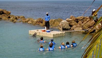 """<span style=""""color:#FF0000;""""><b>8. Zwem met dolfijnen in Dolphins Cove </b></span><br /> Zwemmen met dolfijnen staat zowat bij iedereen op nummer één op de bucket list. Bij Dolphins Cove kun je niet alleen met dolfijnen zwemmen, maar ook met roggen. De dolfijnen zitten trouwens niet in een zwembad maar zwemmen rond in de zee. Op die manier kunnen ze blijven genieten van het gezelschap van andere vissen. Afhankelijk van het pakket dat je kiest, mag je de dieren aaien, er mee zwemmen of je zelfs door hen laten voortduwen in het water. Een onvergetelijke ervaring!"""
