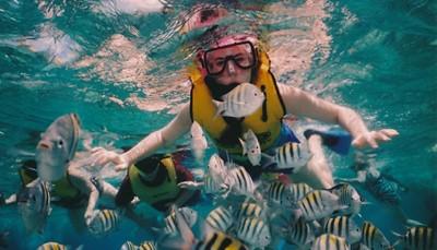 """<br /> <span style=""""color:#FF0000;""""><strong>Wat wil je doen aan het strand?</strong></span><br /> Nog een mogelijkheid om droomstranden te filteren? Maak vooraf voor jezelf uit wat je het liefst doet. Is dat duiken of snorkelen ? Dan is Marsa Alam in Egypte een aanrader.&nbsp; Liever surfen? Dan is Portugal een goed idee. Wil je&nbsp;de zee combineren met wat cultuur? Dan ga je voor Egypte, Mexico, Kroatië, Griekenland of Marokko. Droom je van zwemmen met dolfijnen? Dan kan onder andere in Mexico. Stel een lijstje van droomervaringen op, en leg het aan ons voor. Het kan ons helpen te bepalen welke droomstranden bij jou passen.<br /> &nbsp;"""