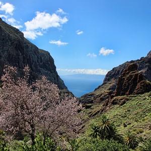 Door ons getest: Tenerife
