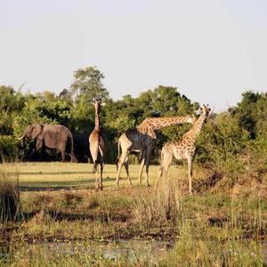 10-daagse reis Zuid-Afrika 1495 euro