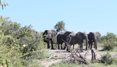 """<ul style=""""text-align:left;padding-left:15px;""""> <li>Big 5 safari (dag 4 en 8) : 125 euro per safari</li> <li>Nachtsafari (dag 4) : 65 euro</li> <li>Avond met lokale stam (dag 5) : 49 euro</li> <li>Safari Pilanesberg Nationaal Park (dag 6) : 145 euro</li> </ul>  <p style=""""text-align:left;""""><strong><u>Combinatievoordeel</u></strong> :<br /> </p>  <ul style=""""text-align:left;padding-left:15px;""""> <li>Reservatie van alle 4 de activiteiten (met 1 x Big 5 safari) : 300 euro<br /> </li> <li>Reservatie van de 5 activiteiten (met 2 x Big 5 safari) : 349 euro</li> </ul>  <p style=""""text-align:left;"""">OPGELET : dit zijn richtprijzen gebaseerd op de wisselkoersen van augustus 2019. De betaling en reservatie gebeurt ter plaatse.</p>"""