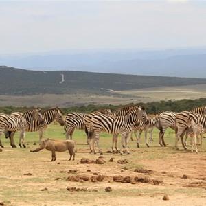 Afrika en Oceanië reisbeurs : safari en droomstranden