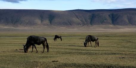 De Ngorongoro-krater