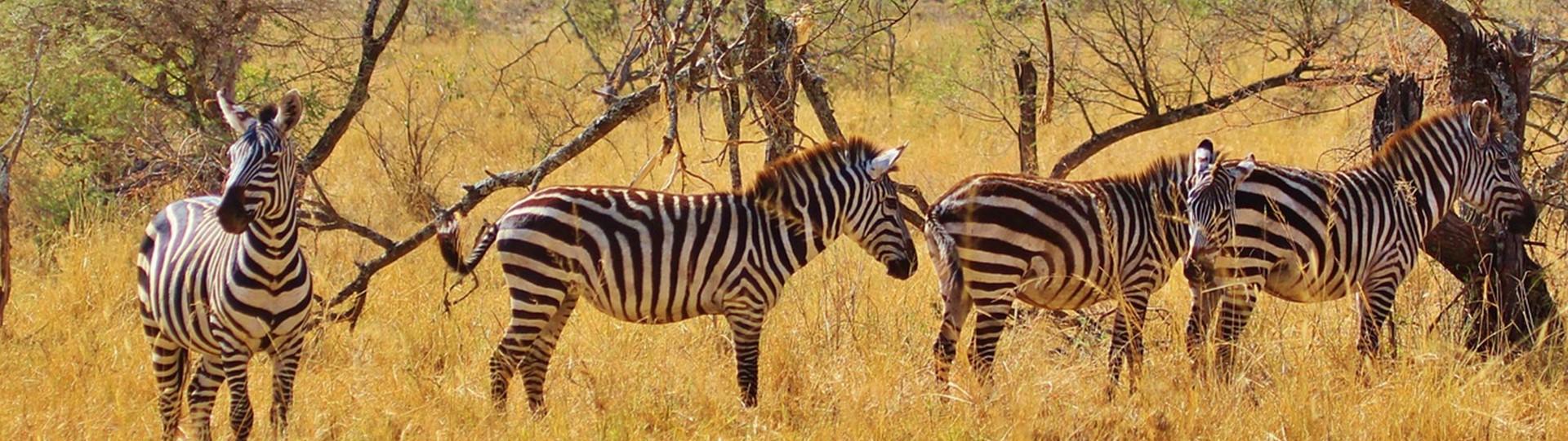 Op safari in Tanzania, een overgetelijke beleving