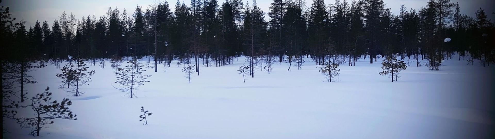 Reisverslag Winters Lapland
