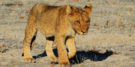 Out of  the box: een safari