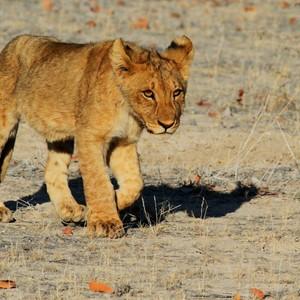 Welke safari past bij jou?