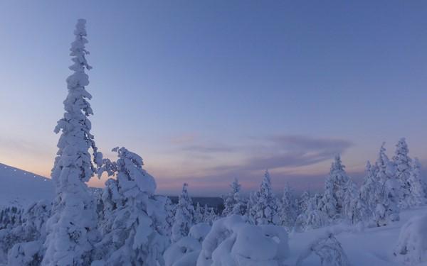 5 dagen Lapland inclusief 3 excursies
