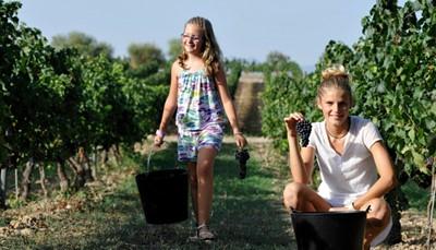 <strong>BUCKET LIST in Alt Penedès: de wijnhuizen</strong><br /> Breng een bezoek aan de wijngaarden van (bijvoorbeeld) Segura Viudas, op slechts 45 minuten rijden van Barcelona. Je krijgt er een begeleide rondleiding door de wijngaarden, uitleg over het productieproces en uiteraard de kans om te proeven. Op Can Nadal de la Boadella, het landgoed van wijnproducent Nadal mag je dan weer zelf mee druiven plukken, of op een elektrische fiets door de wijngaard rijden.<br /> &nbsp;