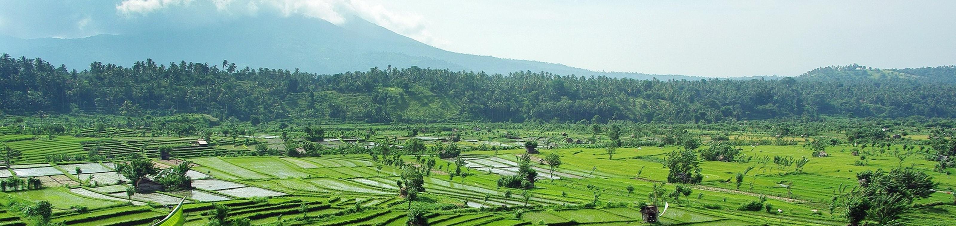 Bali 4 Kids