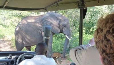 Chobe National Park ligt in het noorden van Botswana. Bijna alle dieren die in Zuid Afrika leven komen er voor, met uitzondering van de neushoorn. Maar als er één dier is waar Chobe echt voor gekend is, dan is het wel de olifant. De olifantenpopulatie in Chobe is de grootste ter wereld. Maar je vindt er ook andere dieren, zoals buffels, impala's, gnoes, zebra's, giraffes en antilopes.<br />