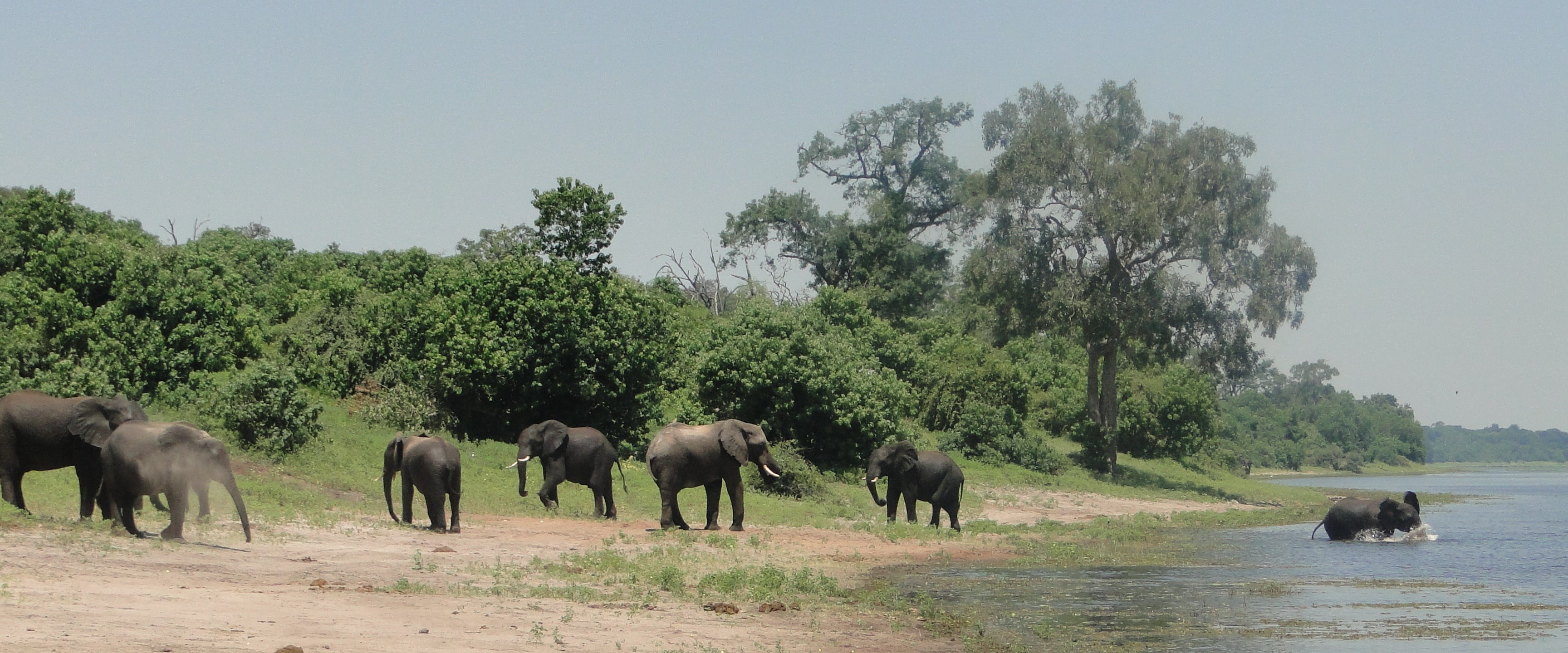Individuele rondreis Botswana