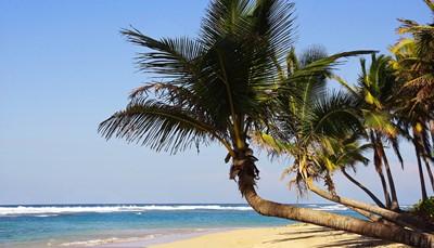 Tussen november en april valt er weinig regen in de Dominicaanse Republiek en ligt de temperatuur er rond 27 tot 30 graden. De helderblauwe zee, prachtige stranden en uitstekende hotels maken Punta Cana tot een geliefde bestemming voor koppels. Romantiek troef: zalige strandwandelingen, een excursie naar het bounty-eiland Saona of genieten van een cocktail met opzwepende bachata-muziek op de achtergrond.