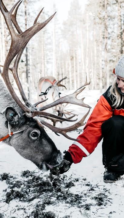 Ontdekking van Lapland