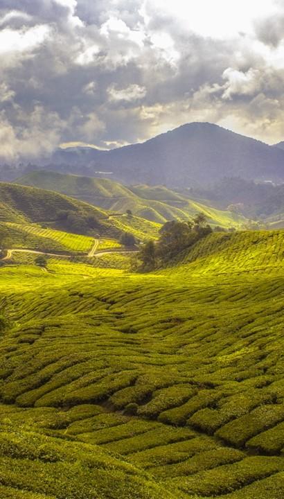 Rondreis op maat naar Maleisië